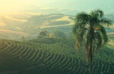 Koffieplantages in provincie Minas Gerais in Brazilie.
