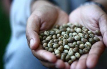 Peaberry koffiebonen