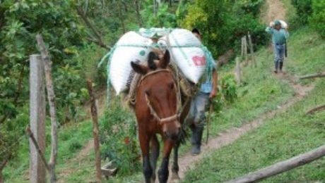 Koffie uit de streek Huila in Colombia