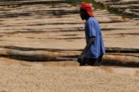 Blommers-Coffee-Roasters-Kenya1