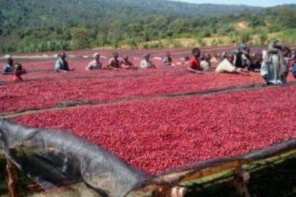 Burundi Schot -droogbedden