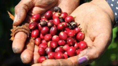 Brazil coffee