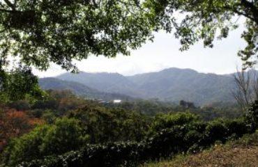Candelilla plantage