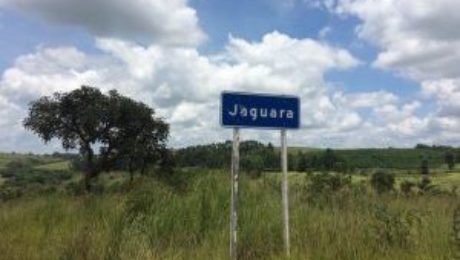 jaguara plantation brazilie