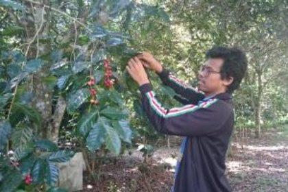 Thailand koffie